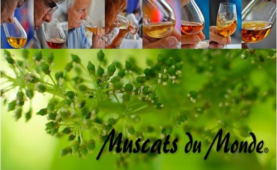 Le Muscat 12 ans d'âge de Frontignan Muscat propulsé meilleur muscat du monde !